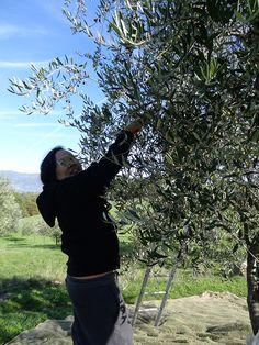 Anita Lo del ristorante Annisa (NY), 1 Michelin Star #oliveoil