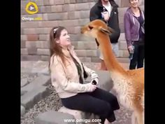 Worlds Most Wanted Funny Animals Videos