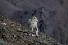 Alaska - weltreisewelt Indian Summer, Alaska, Fjord, Animals, National Forest, Travel, Animales, Animaux, Animal