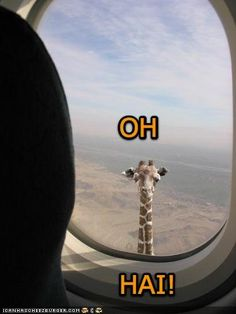 Funny Giraffe | Dress Success! : wedding dress milwaulkee shoes 12 1