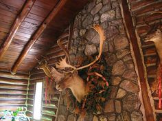 Caribou mount hanging on log cabin chimney