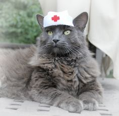 Nurse Cat Hat - Vintage Syle Pet Nurse