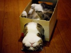 Maru in a box.