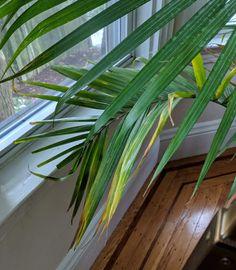 9f9a945990e1dbe8bba4ce5db35f4c90 Palm House Plant With Yellow Flowers on vine plant with yellow flowers, broadleaf plant with yellow flowers, succulent plant with yellow flowers, fern plant with yellow flowers,