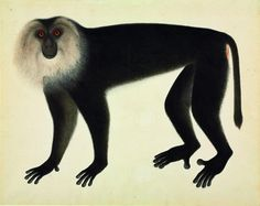 Lion-haired macaque, ca.1820s