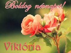 Boldog névnapot, Viktória! Name Day, Rose, Birthday, Flowers, Figurative, Pink, Birthdays, Saint Name Day, Roses