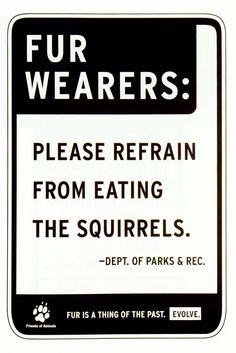 Squirrels - Shocase
