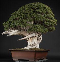 Eternal Movement... Living Bonsai Simply Wonderful!!