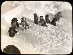 Dogs aboard the Endurance expedition date (1914-1916) - Ernest Shackleton and Frank Wild.