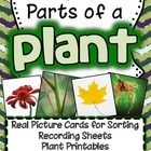 I love using real pictures in science...and so do my students! This Parts of a Plant unit includes 24 real pictures for sorting - 6 examples of pla...