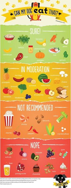 Can my dog eat that? This infographic makes it so clear!