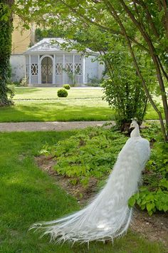 How pretty would white peacocks be at a wedding?!