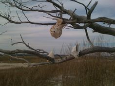 Masonboro Island is a barrier island in North Carolina. The island, which is undeveloped and accessible only by boat, is a component of the North Carolina National Estuarine Research Reserve.