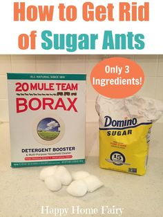 How to Get Rid of Sugar Ants With Just 3 Ingredients! How to Get Rid of Sugar Ants With Just 3 Ingre