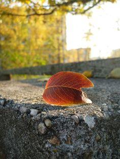 Walks in autumn My Point Of View, Walks, Autumn, Fall