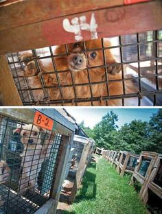 Pet stores need to go humane instead of selling puppy mill puppies in stores and online!!! Photos: Courtesy of Kathy Milani