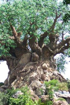 Mysterious Carved Tree Hoax - it may be a hoax but this is eye candy for the tree lover in me!