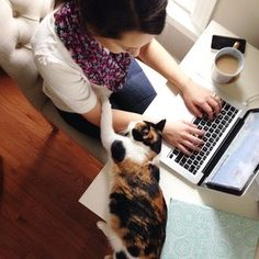 There's just something so obnoxious and endearing about #heidithecalico getting all up in my workspace. #happyfriday