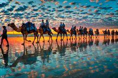 Camel train coming