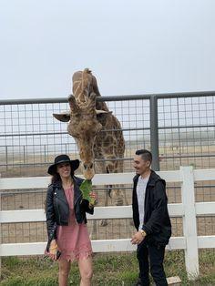 Malibu Wine Safari and Beer Garden Malibu Wine Safari, Malibu Wines, Beer Garden, Giraffe, Tours, Felt Giraffe, Giraffes