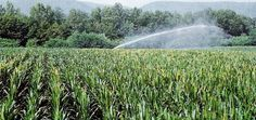 Why #Irrigation #Pumps are helpful for your fields?