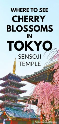 Tokyo Japan travel tips for Japan cherry blossoms in east Asia, asakusa neighborhood where to stay near sensoji temple. Spring season in Japan. best places to visit for photo spots in Tokyo. peak season for cherry blossom time. what months is season. March, April. sakura hanami photos spots. best things to do in tokyo japan. backpacking japan culture travel ideas. #flashpackingjapan