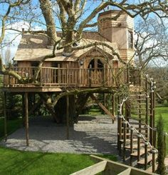 I want a tree house!