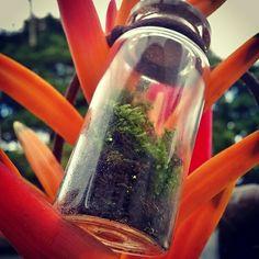 Jardim no Potinho de Vidro - Musgo Vivo -Pingente Vivo