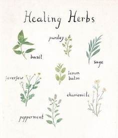 It's gardening season! Home Remedies, Herb, Doodles, Grass, Fried Cabbage, Herbs, Doodle Art, Home Health Remedies, Doodle