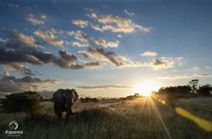 [New] The 10 All-Time Best Home Decor (in the World) - Heres some more shots of the mind-blowing sighting we had on Saturday. Elephants moving across the open plains as the sun was dropping behind the Drakensberg Mountains. River Lodge, Private Games, Photography Competitions, Photo Competition, Game Reserve, Once In A Lifetime, Zebras, Wildlife Photography, Mind Blown