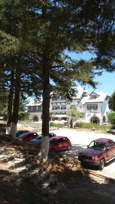 Elafos Hotel Rhodos Cypress Trees, Greek Islands, Rhodes, Rhode Island, Landscapes, Environment, Building, Plants, Beautiful