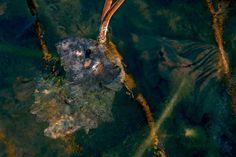 Les Chimères de l'étang  80 x 120 cm 12ex