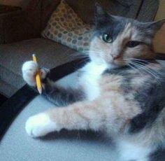 Ce chat pense être le prochain auteur star de sa génération et n'apprécie pas du tout votre air suspicieux.