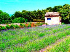 Saint Paul de Mausole Asylum, St. Remy, France Asylum, France Travel, 50th Anniversary, Saints, Mountains, Painting, Ideas, Painting Art, Paintings