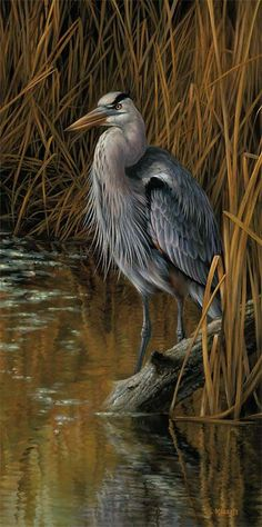 """Blue Heron"" by Rosemary Millette"