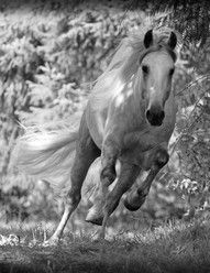 His hooves pound the beat, your heart sings the song.  ~Jerry Shulman
