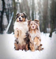 """Se psy podle Veroniky 🐾 na Instagrame: """"Kdy začít s výcvikem psa❓Toto je určitě jeden z nejčastějších dotazů, které mi od vás chodí😊!  Je to vlastně docela těžká otázka. Určitě…"""" Cute Funny Animals, Merlin, Veronica, Instagram, Dogs, Pet Dogs, Doggies"""