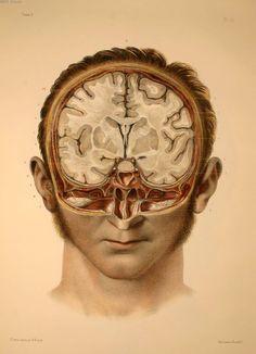 Bourgery, Jean Marc. - Traité complet de l'anatomie de l'homme, par les Drs Bourgery et Claude Bernard et le professeur-dessinateur-anatomiste N.H. Jacob, avec le concours de Ludovic Hirschfeld.