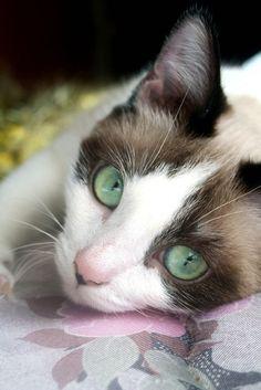 Beautiful kitty! Love those eyes!