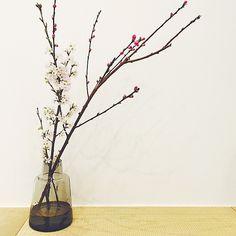 ホルムガードに : 桃の花、枝もの*生け方の参考資料*桃の節句 - NAVER まとめ