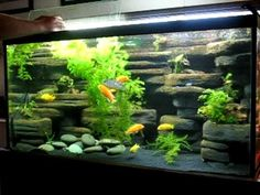 DIY aquarium background - 90 gallon made from styrofoam and cement - YouTube