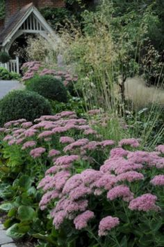 My Favorite Plant Combinations 59