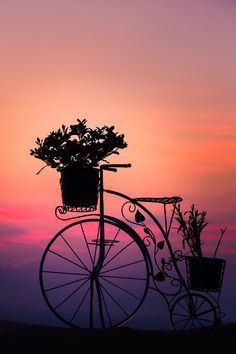 Sunset, bicycle, cykel, vehicle, transportation, romance, romantic, colour, Mother Nature, breathtaking, silhouet, flowers, beautiful, photo.