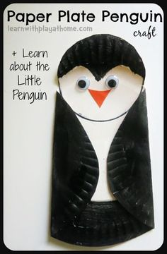 Learning about Little Penguins. Simple Paper Plate Penguin Craft.