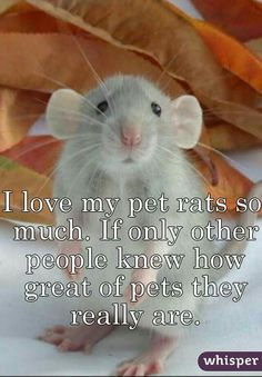 Absolutely true! I will never again live without at least two pet rats. They are the best pets we have ever had!