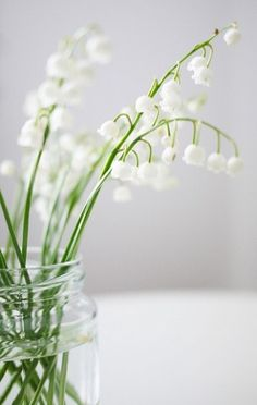 Lilies of the valley - my favorite