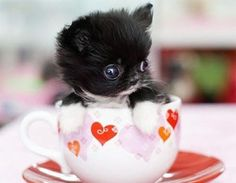 Oh, waiter? There's a kitten in my tea.