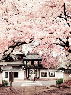Image de japan, pink, and sakura