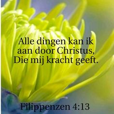 Filippenzen 4
