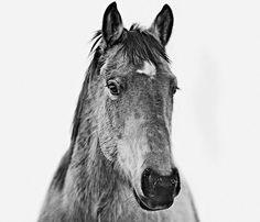 Montana Horse Print